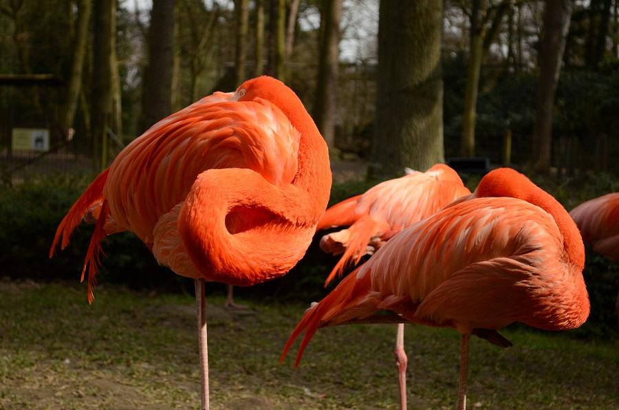 flamingo rostock