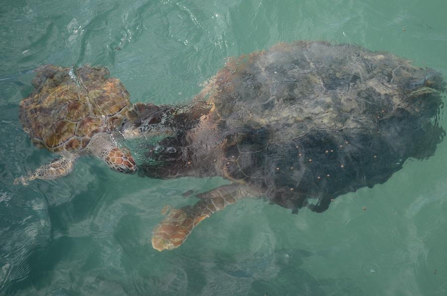 schildkröte isla mujeres