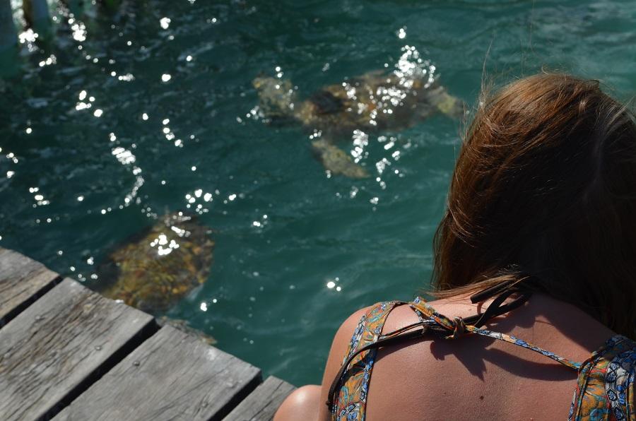 schildkröten bezirzt
