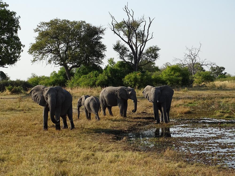 elefanten2334