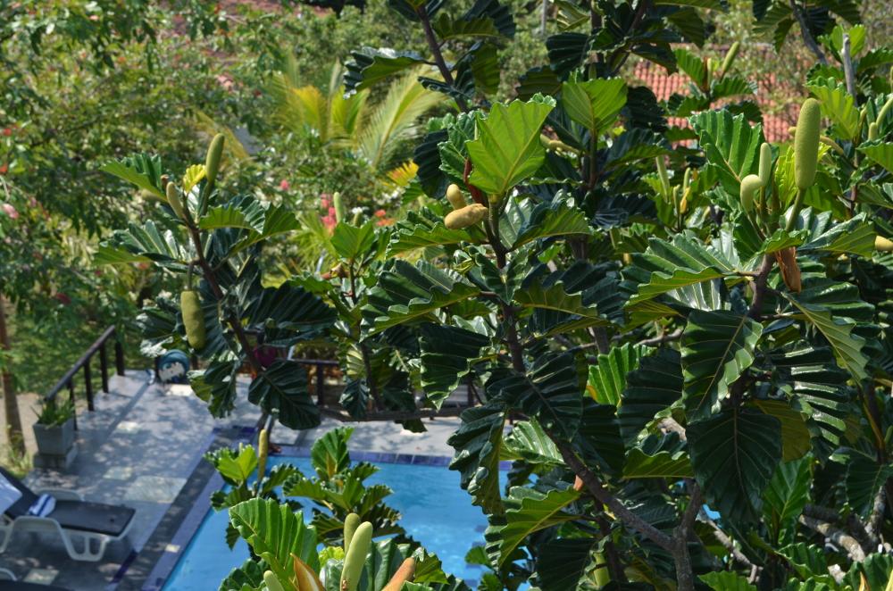 Pool Hotel Unawatuna