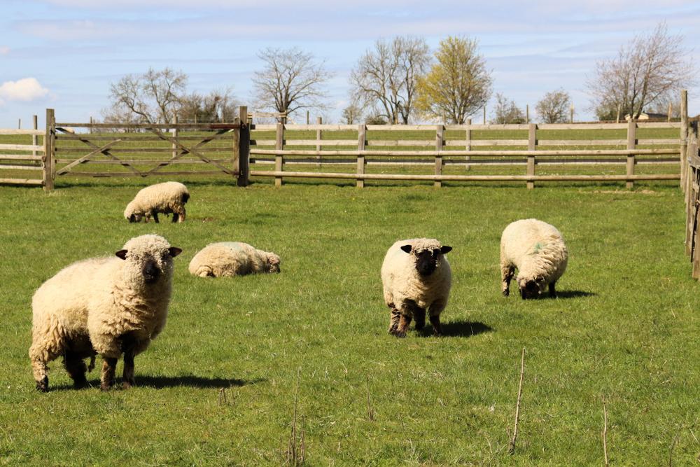 Cotswolds Banbury Hll Farm